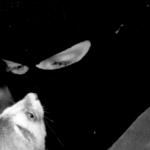 Person in a balaclava comforts a mink