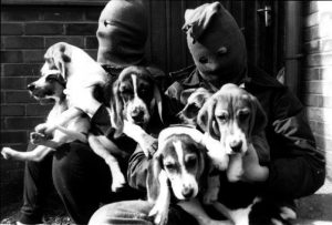 Photos of beagles being liberated